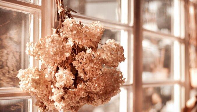 Stikls, metāls, koks. Kā uzturēt un saglabāt logus labā kārtībā ilgāk?