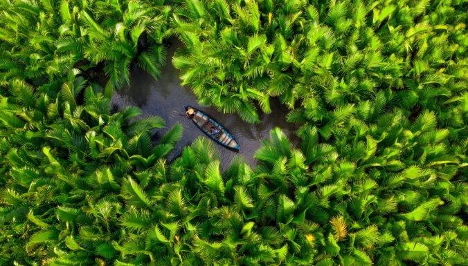 Dienas ceļojumu foto: Zveja starp kokospalmām Vjetnamā