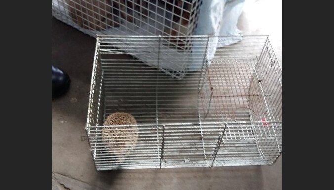 ЧП на ул. Локомотивес: из квартиры изъяты девять собак, ежик, жаба и три мыши (ФОТО)