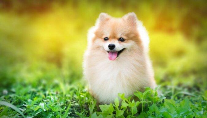 Piecas pazīmes, kas atbildīgu suņa saimnieku atšķir no vieglprātīga