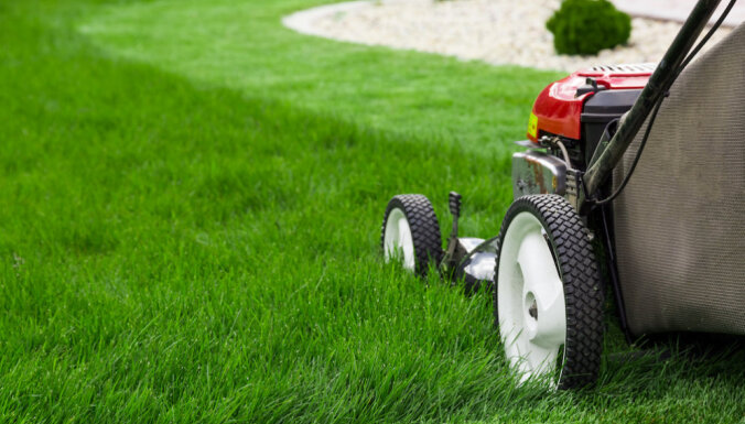 Стрижка газонов в Риге подешевеет в два раза