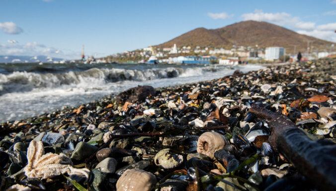 Причиной загрязнения на Камчатке официально признали цветение водорослей