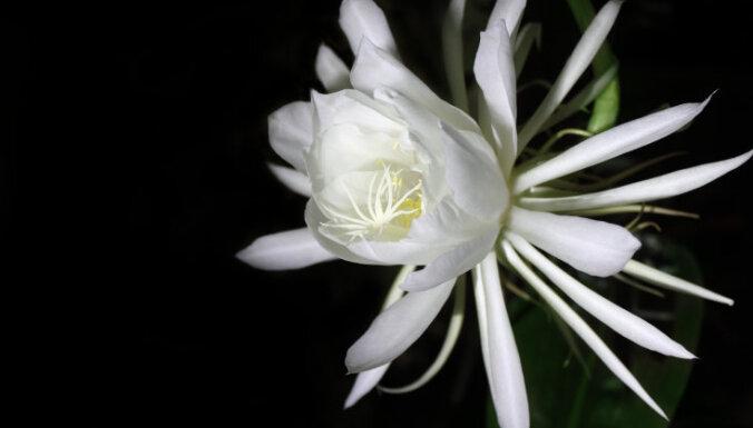Девять удивительных цветов, цветущих лишь ночью