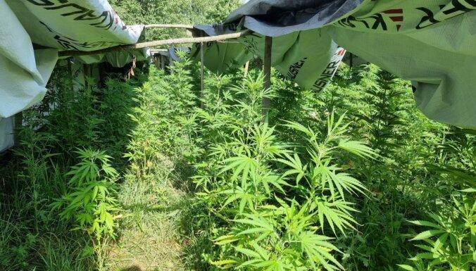 Jēkabpils novadā policija konfiscē 195 narkotiskās vielas saturošus augus
