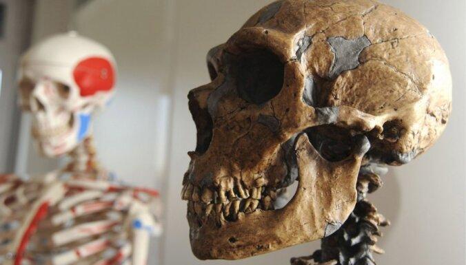 Археологи: последние неандертальцы жили на Урале