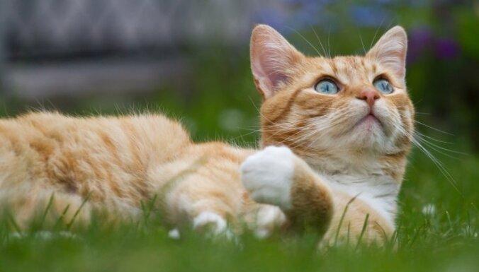 Ученые выяснили, как нужно гладить кошек