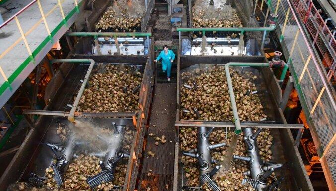 Baltkrievijā pazuduši visu cukurfabriku direktori