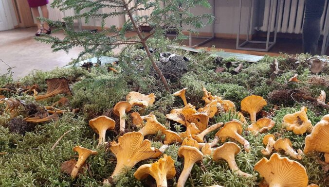 Milzu pūpēdis, zaļā mušmire un citi ēdami un neēdami dabas brīnumi Dabas muzeja izstādē 'Sēņu dienas'