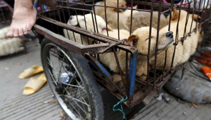 Foto: Ķīnieši dzīro suņa gaļas festivālā