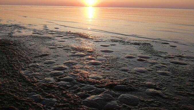ФОТО: Сотни медуз любуются закатом на пляже