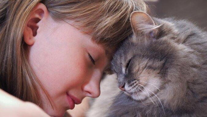 Ласковые или игривые? ТОП-6 лучших пород кошек для семей с детьми