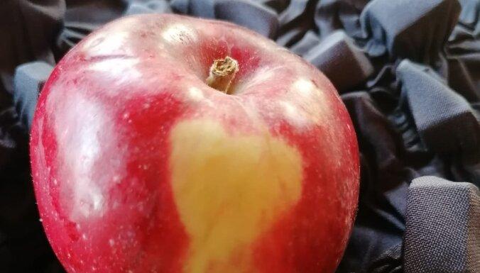 Dabas māksla uz āboliem un tās rašanās iemesli