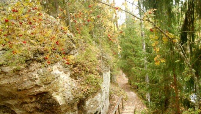 Rudens klasika: 5 skaisti maršruti velobraucienam vai pārgājienam Gaujas nacionālajā parkā