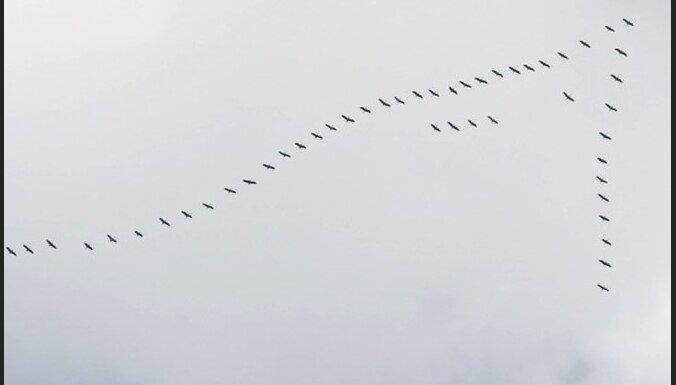 Pavēlais pavasaris ietekmējis arī putnu atgriešanos no ziemošanas vietām