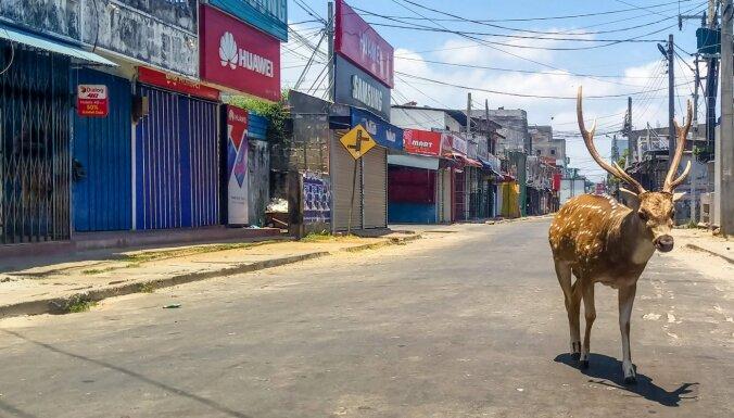 ВИДЕО. Пока все дома: животные выходят на опустевшие улицы городов