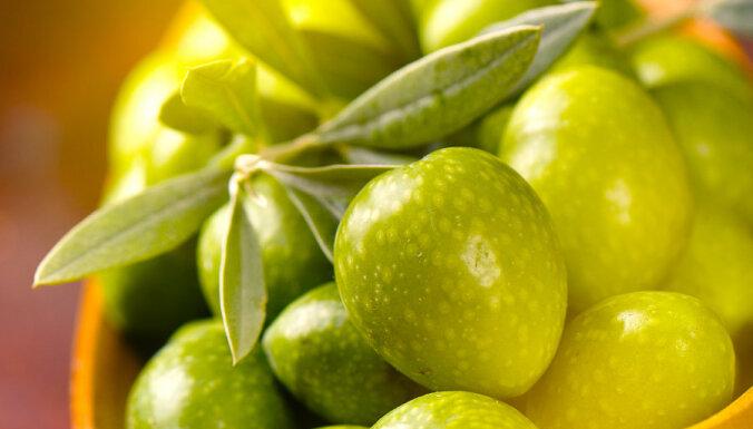 Трагедия Италии! Почему мир может остаться без знаменитого оливкового масла