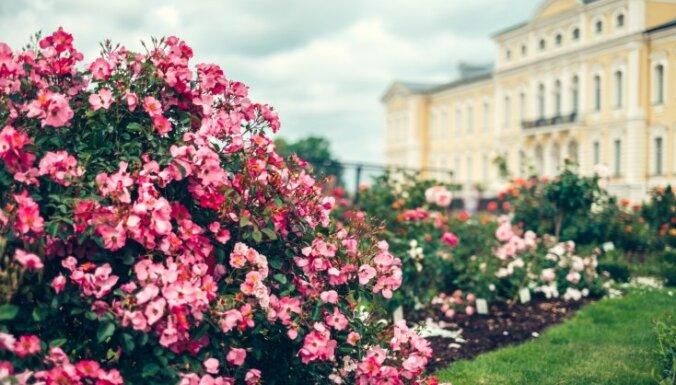 Охота на розы: 1 июля в Рундале пройдет Праздник сада