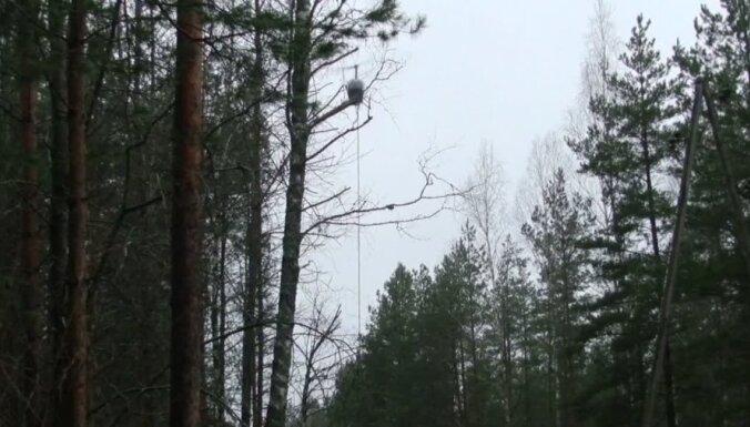 Valsts prezidents atgriež Saeimai likuma grozījumus par elektrolīnijās nocirsto koku atpirkšanu