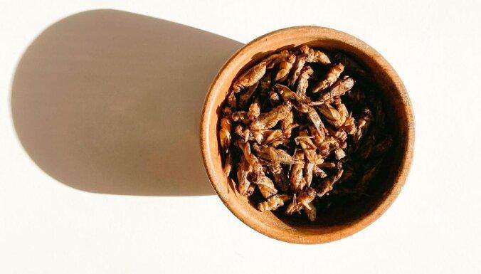 Žāvētu circeņu gardēdis Jēkabs par to, kāpēc cilvēkiem būtu jāēd kukaiņi