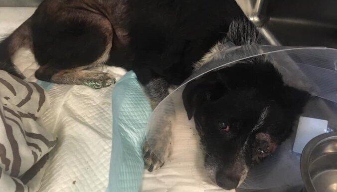 Живодер, изувечивший старую собаку, получил реальный срок