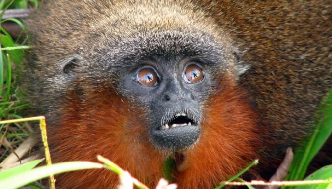Amazones džungļos atklāti neparasti zvēri un augi