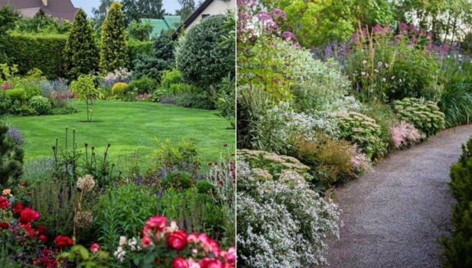 Trīs 'Instagram' konti ar skaistiem dārziem, kas būs iedvesmas avots