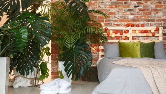 5 советов по фэн-шуй, которые превратят ваш дом в оазис спокойствия