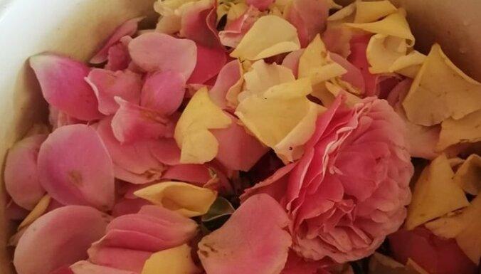 Karalienes rožu želeja