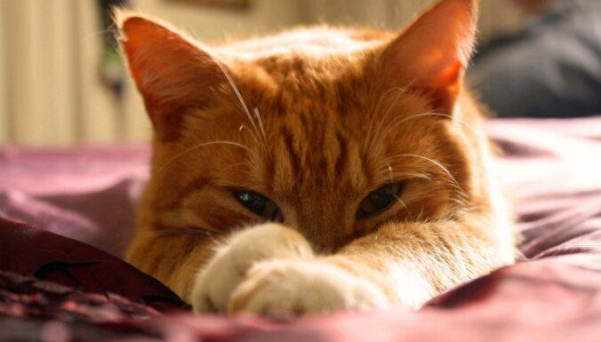 Kaķu zinātne: kā pareizi uzsmaidīt savam mincim