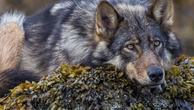 15 лучших фотографий животных из Instagram'а National Geographic