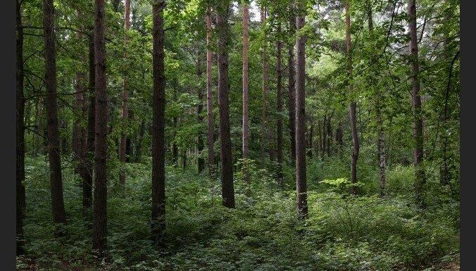 Mežā Kārsavas pusē apmaldās 50 gadus vecs vīrietis