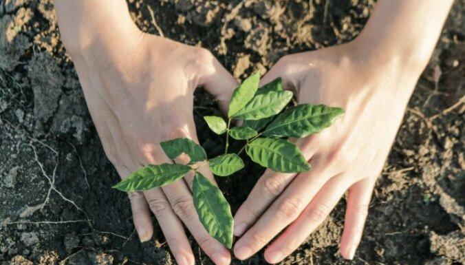 ANO 2020. gadu pasludinājusi par Starptautisko augu veselības gadu