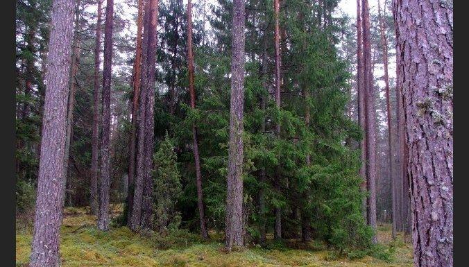 В лесу найден очередной мертвый малыш