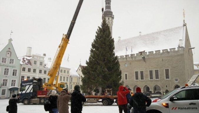 Tallinas Rātslaukumā jau 'ieradusies' Ziemassvētku egle