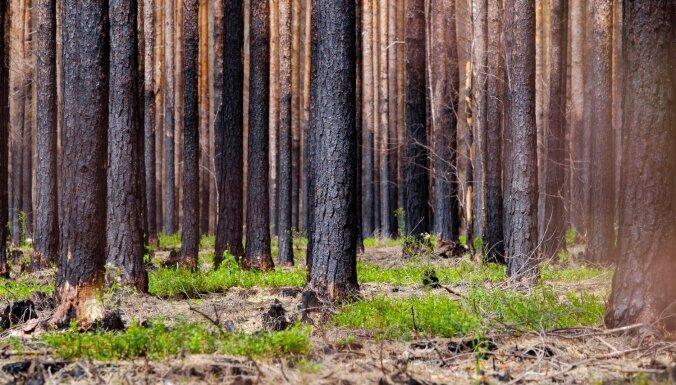Синоптики предупреждают о высокой пожароопасности в лесах