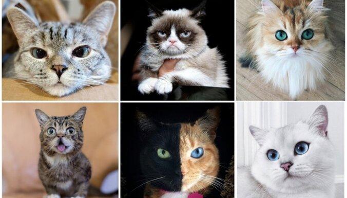 Miljonu uzmanības centrā: seši populārākie kaķi internetā