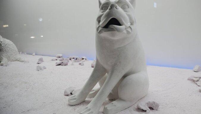 Аристократ, разбойник и дикарка. Три теплые истории собак Кристианы Димитере, украсивших улицу Риги