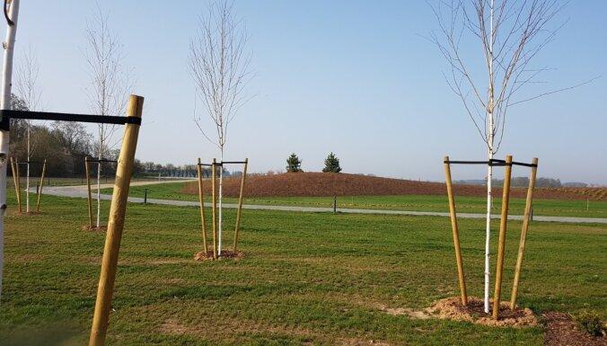 Soli pa solim: kā rūpēties par koku pēc iestādīšanas