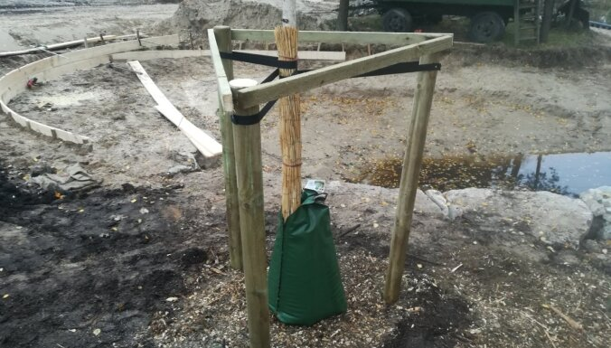Koku stādīšanas gudrības: no stādāmbedres sagatavošanas līdz rūpēm pēc iestādīšanas