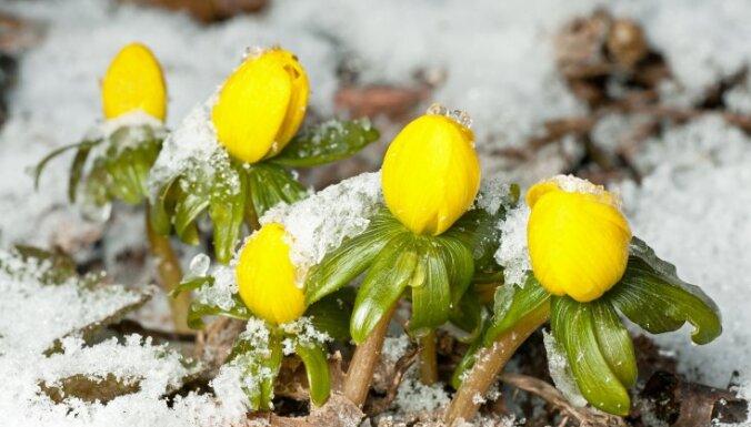 Между зимой и началом весны: что делать в саду в феврале?