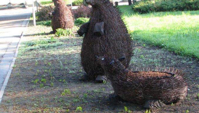 Pilsētas svētku priekšvakarā Jelgavu apsēduši eži un bebri