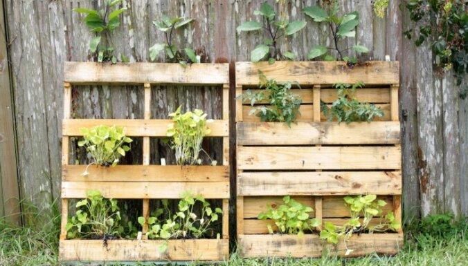 Kāpelējoši augi, vertikālas dobes un citi dārza elementi, kas šogad modē
