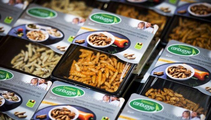Бутерброд с маслом из насекомых или водорослей — как альтернатива пальмовому маслу