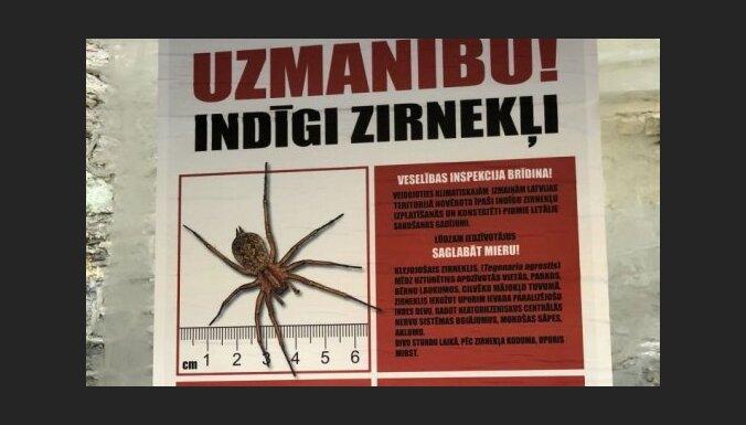 """""""Фейковые"""" плакаты о ядовитых пауках в Латвии: полиция не будет начинать уголовный процесс"""