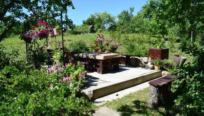 Foto: Sakoptākās lauku sētas un skaistākie dārzi Ciblas novadā