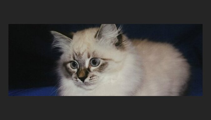 Медведев подарит симпатичного котенка экс-президенту Финляндии (фото)