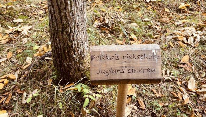 Foto: Pastaiga pa Lāčupītes labsajūtas dārzu lapkritī