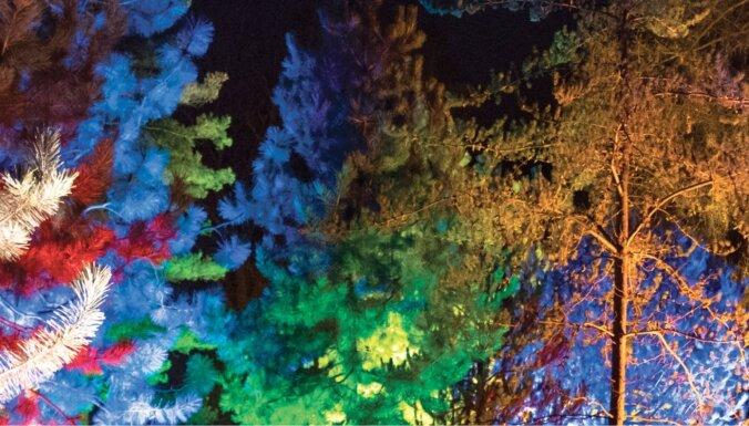 В декабре Ботанический сад ЛУ превратится в Зимний сад света