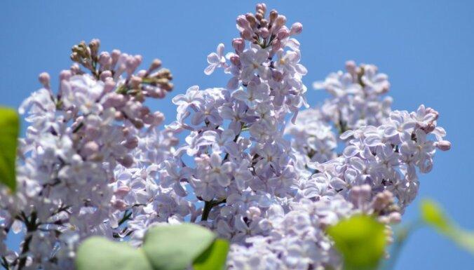 В среду в Латвии начнет теплеть: на следующей неделе придет жара
