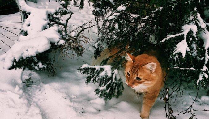 Naktī un svētdien turpinās snigt, dažviet jau pāri 10 centimetriem